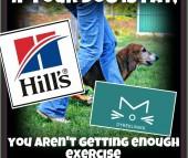 PREMIEDRYSS FRA HILL'S!